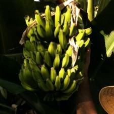 An image of Fruitwhisperer